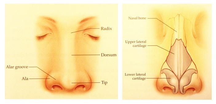 face 1 - Review เบื้องหลังการบุกเบิกเทคนิคการเสริมจมูกด้วยกระดูกอ่อน (PSC technique) การผ่าตัดการเสริมจมูกด้วยกระดูกอ่อน มาตรฐานสูงสุดของความงามและความปลอดภัยในการเสริมจมูกยุคปัจจุบัน By Dr.Peera